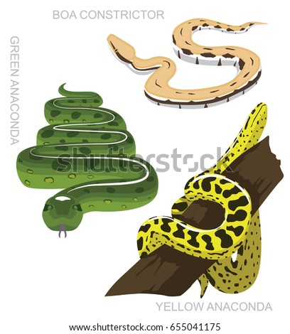 snake anaconda set cartoon