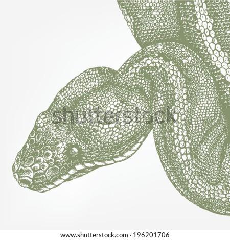 snake head green boa
