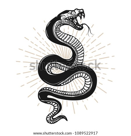 snake illustration on white