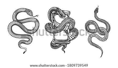snakes illustrations vector design elements for designers