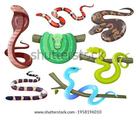 Snakes, wild tropical serpents isolated on white background. Cobra, california mountain kingsnake, green tree and ball python, trimeresurus salazar and insularis. Vector cartoon set of exotic reptiles Foto stock ©