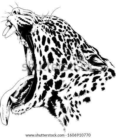 snarling face of a leopard