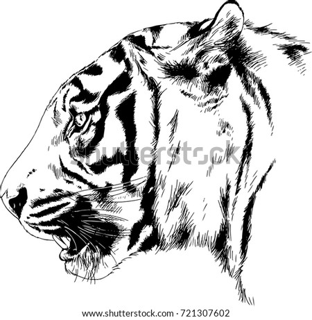 snarling face of a tiger drawn