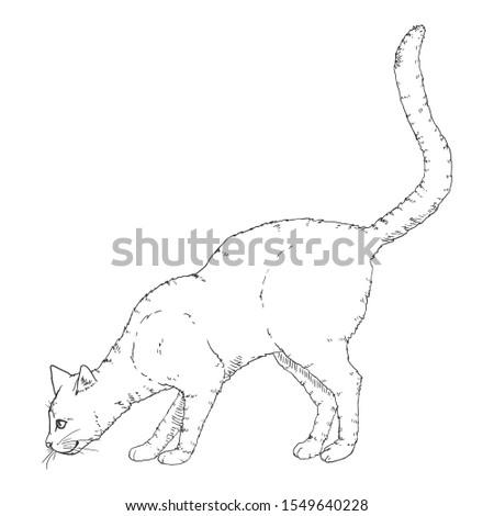 Sniffing Cat. Vector Black Sketch Feline Illustration