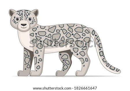 snow leopard standing on a