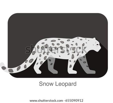 snow leopard walking side flat