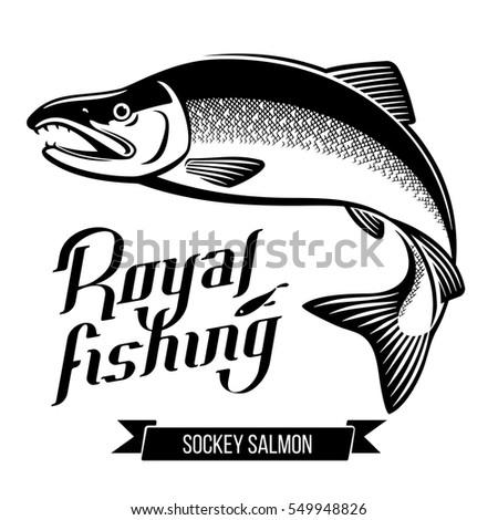 sockey salmon fish black and