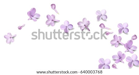 Soft pastel color floral background with place for text. Purple Lilac flowers and petals watercolor style vector illustration template