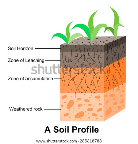 Soil formation and soil horizons stock vector 285618788 for Explain the formation of soil