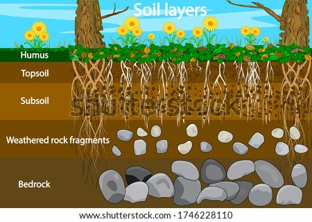 Soil layers. Diagram for layer of soil. Soil layer scheme with grass and roots, earth texture and stones. Cross section of humus or organic and underground soil layers beneath. Vector illustration