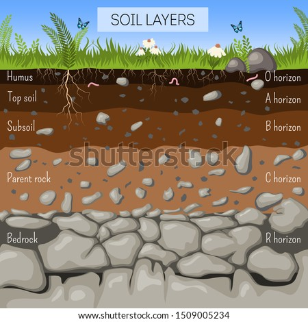 Soil layers diagram with grass, earth texture, stones, plant roots, underground species. Geology infographics, Education for kids. Cartoon style vector illustration.