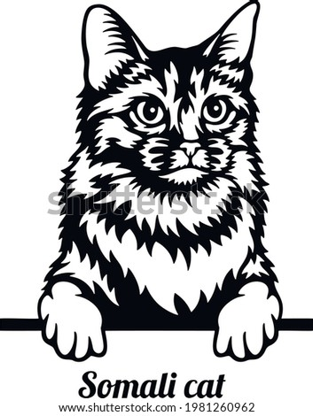 Somali Cat - Cat breed. Cat breed head isolated on a white background Zdjęcia stock ©