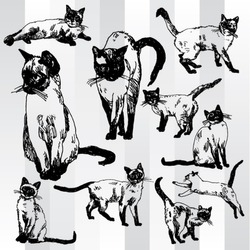 Some Cats Hand Drawn