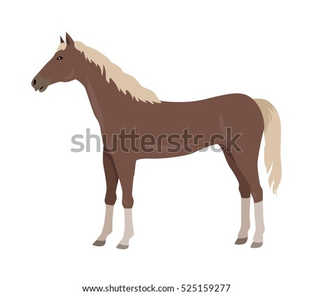 sorrel horse with white legs