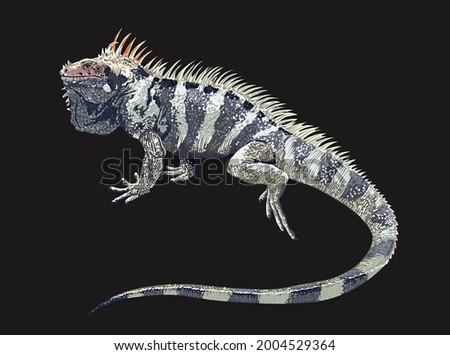 sounthen antilles iguana, rare, large, exotic iguana, reptilian, vector Сток-фото ©