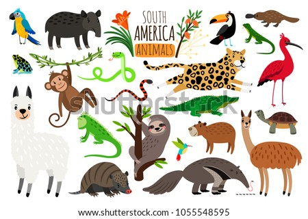 South America animals. Vector cartoon guanaco and iguana, anteater and ocelot, tapir and armadillo isolated on white background