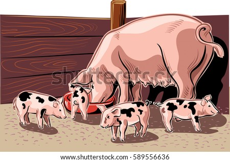 sow with piglets eating in the