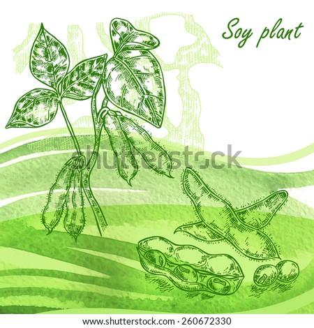 soy plant set hand drawn soy