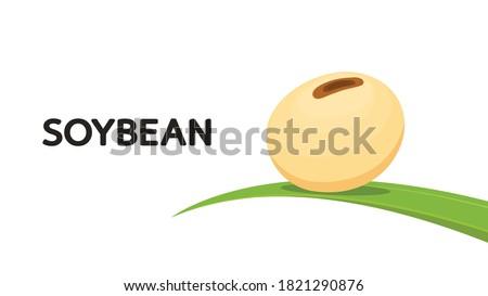 Soybean cartoon vector. Soybean poster design. Soybean on leaf. Foto d'archivio ©
