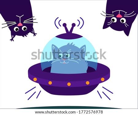 space cat  ute pet kitten is