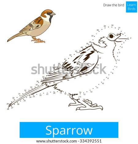Sparrow Learn Birds Educational Game To Draw Vector Illustration Hawk Bird Coloring Book