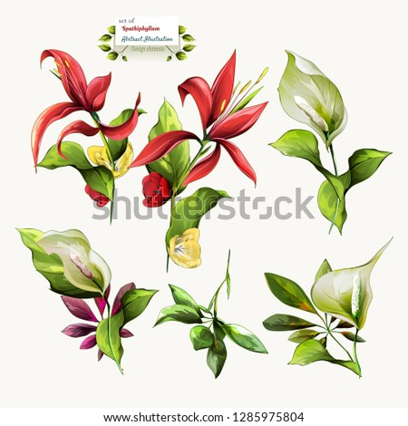 Spathiphyllum flowers. Illustration of nature elements for fabric, textile and other prints. Abstract, watercolor. Hand drawn. Vector - stock.