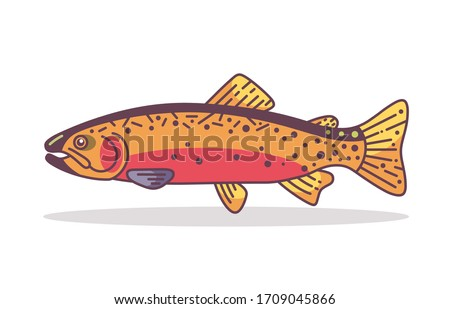 spawning cutthroat trout  fish