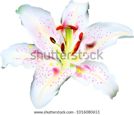 speckled lily summertime