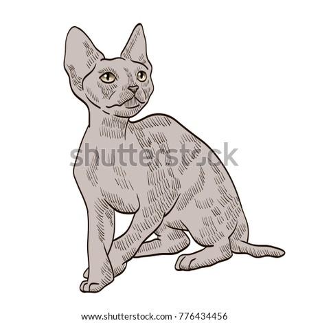 sphynx cat illustration 2