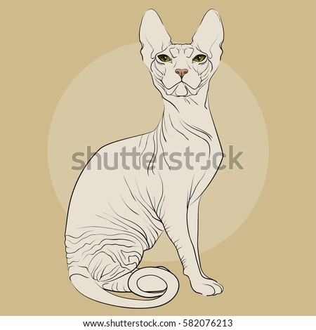 sphynx cat on a beige background