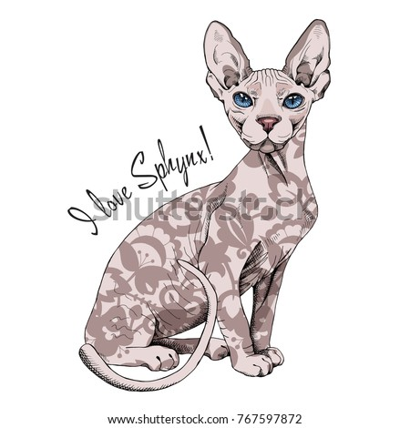 sphynx cat with a floral decor