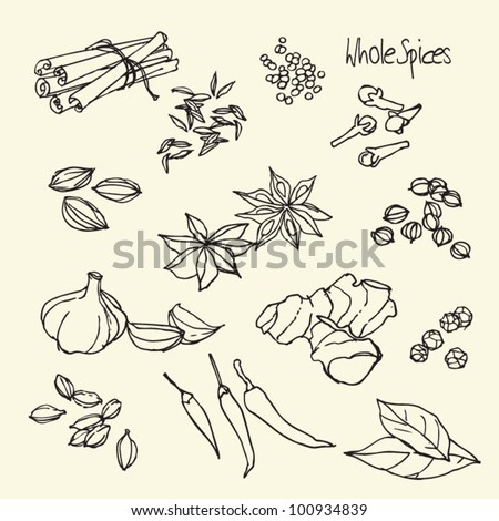Spices doodles vector set