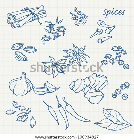 Spices sketchy doodles vector set