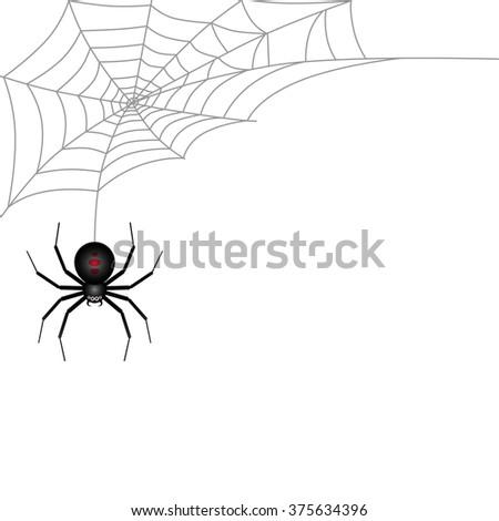 Spider and Cobweb on white background