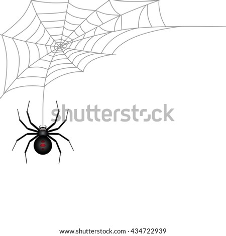 Spider and Cobweb on white background