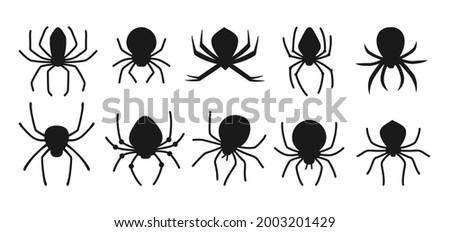 spider halloween black