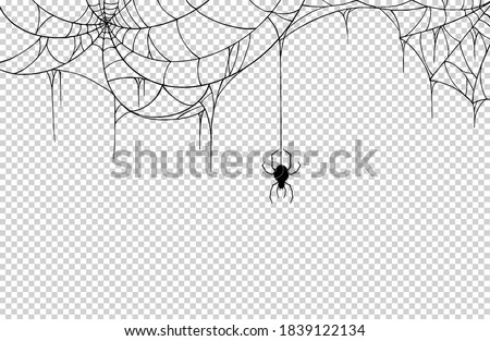 Spider  hanging from spiderwebs isolate on png or transparent  background, graphic resources, vector illustration. ストックフォト ©