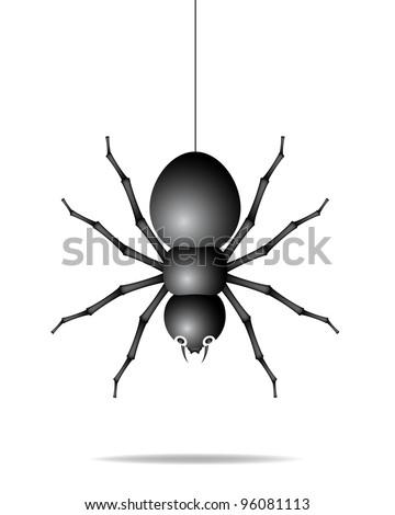 Spider hanging on a gossamer thread