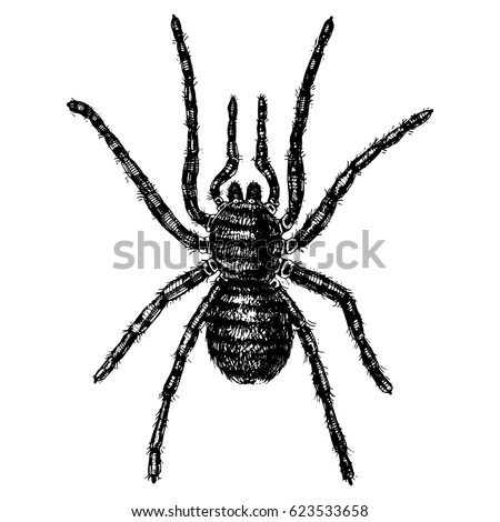 spider or arachnid species