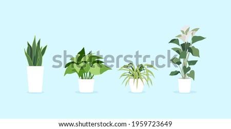 Spider plant, Golden Pothos, Pothos, Araceae, Variegated Snake Plant, Dracaena trifasciata, Snake Plant, Indoor Plants, vector, modern indoor plants ,potted plants.