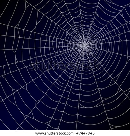 spider's web vector