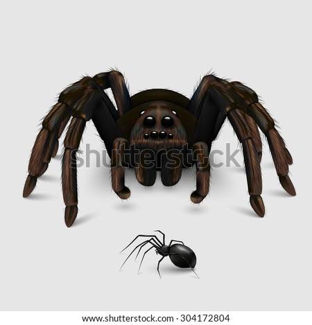 spider tarantula eps 10