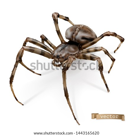 Spider vectorized image. 3d realistic vector icon