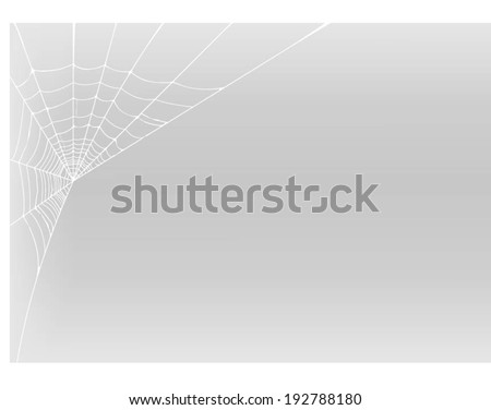 spider web detailed vector
