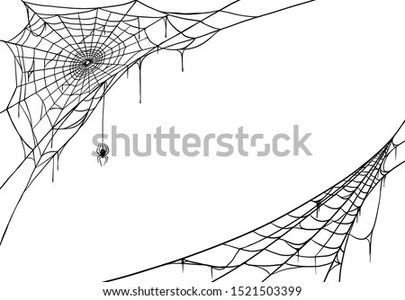 Spider web for cards and background for Halloween Photo stock ©
