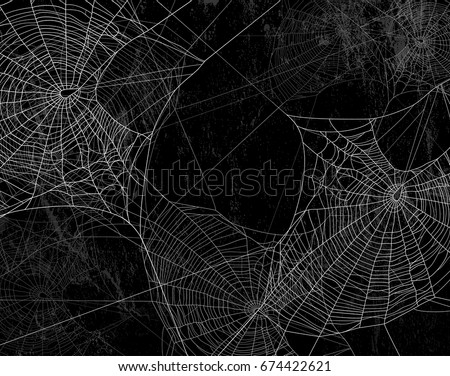 spider web silhouette against