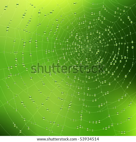 Spider web with dew drops. Vector.