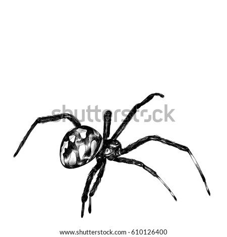 spider with a big belly crawls, sketch vector graphics, black and white drawing