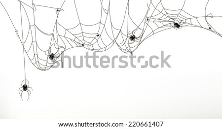 spiders and spider web  vector