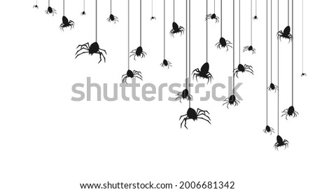 spiders on web with white